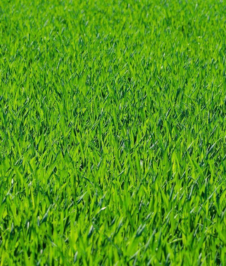 Sposób na piękny zielony trawnik