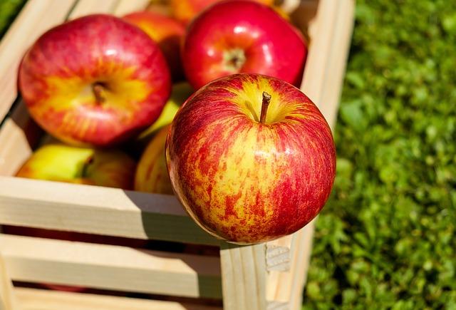 W jakich warunkach przechowywać jabłka?