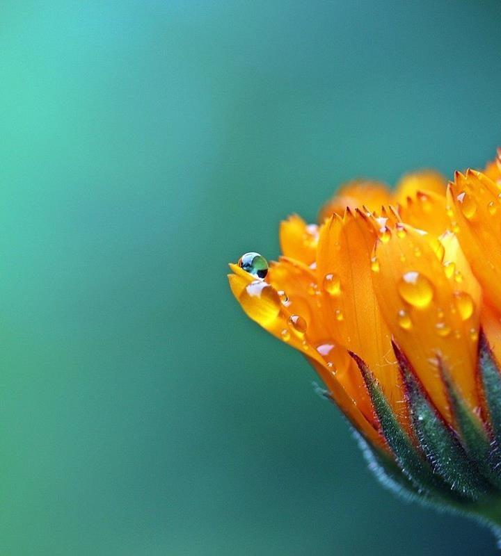 Nie wiesz jakie kwiaty wybrać w aspekcie wiązanki okolicznościowej?