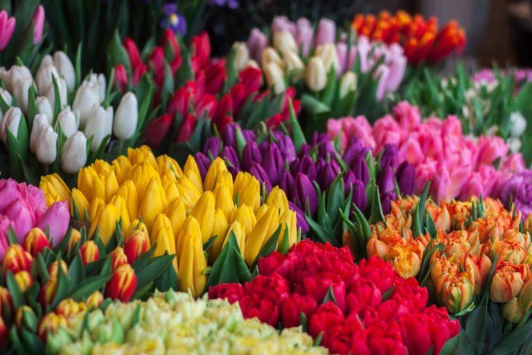 Gdzie kupować kwiaty?