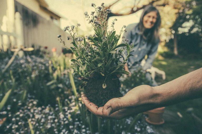 Stworzenie odpowiednio prezentowanego się ogrodu