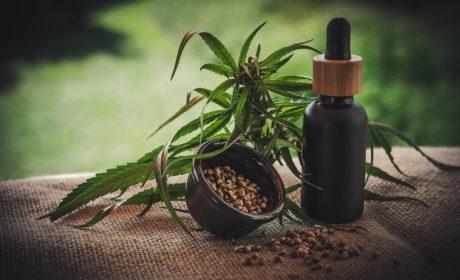 Gdzie kupić sprzęt niezbędny do uprawy marihuany przemysłowej?